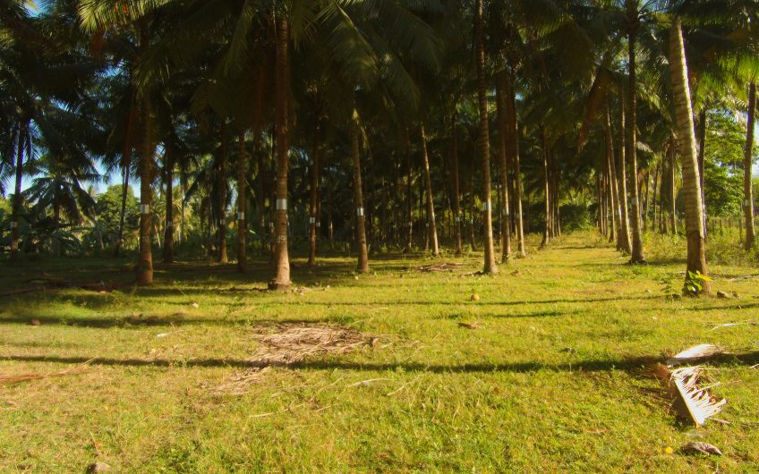 Residential Lot for sale in BalayagManok, Valencia Negros Oriental