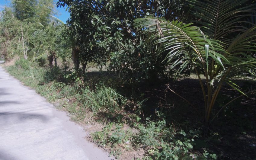 Residential Lot for sale along the cemented road in Bacong, Negros Oriental Philippines