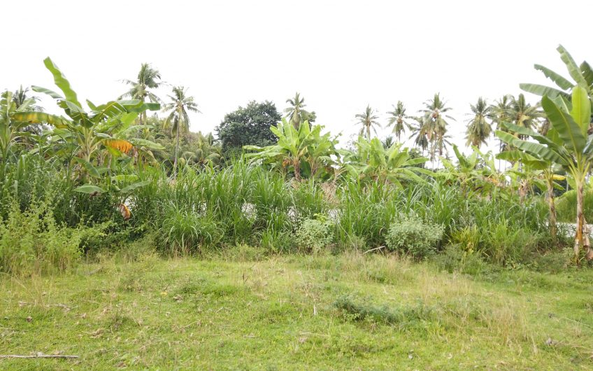 2000sqm Along the National Highway Lot for Sale in Isugan Bacong, Negros Oriental