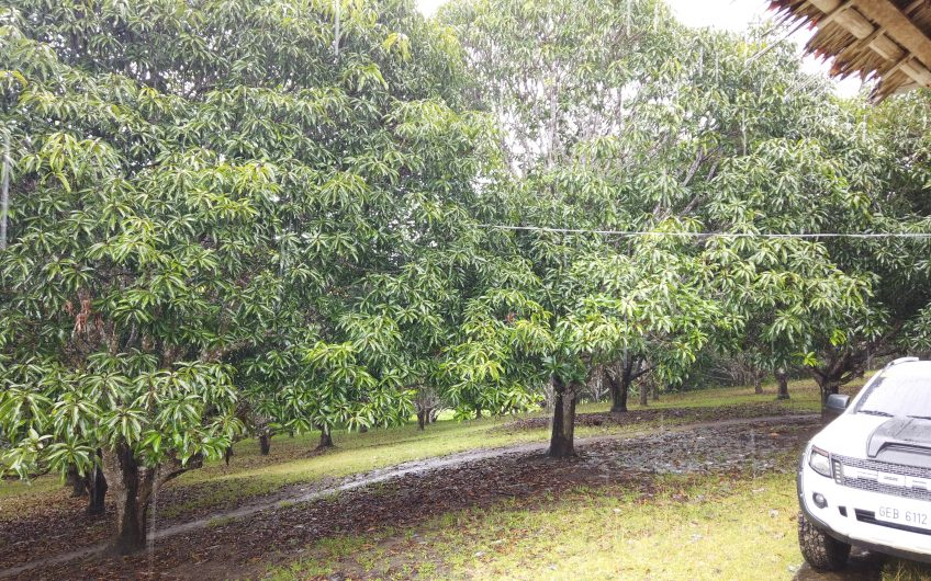 6.8 Hectares Spectacular Farm Lot for Sale in Amlan, Negros Oriental Philippines
